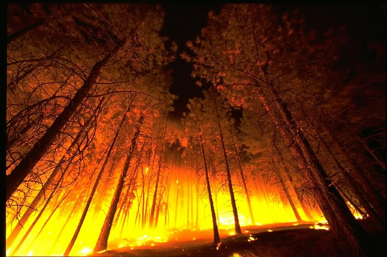 Wildfire_20